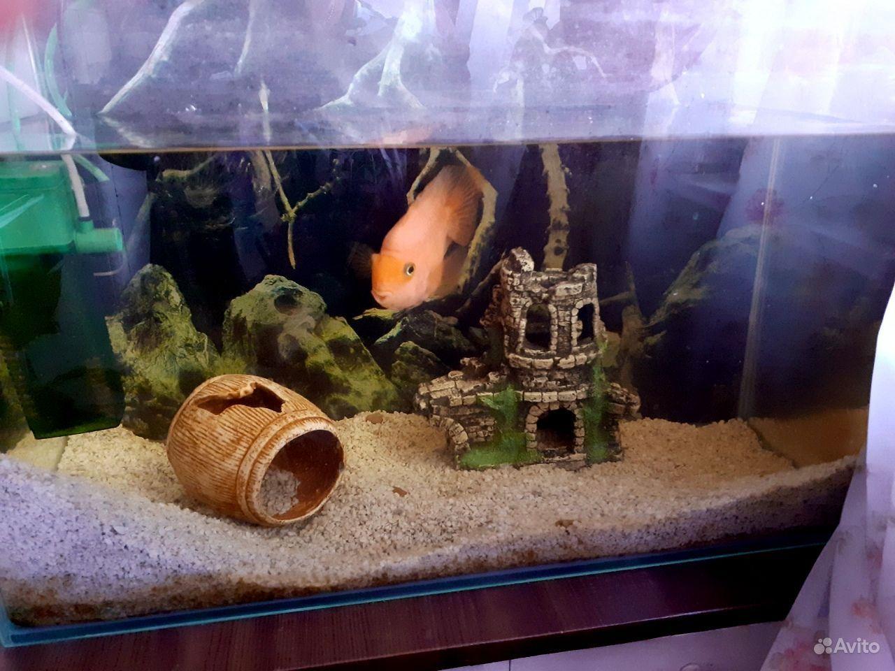 Продам аквариум с попугаем купить на Зозу.ру - фотография № 4
