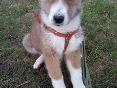 Дарю щенок мальчик 4 месяца