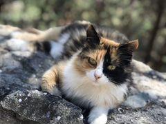 Кошка красотка в добрые руки