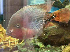 Рыбы большие