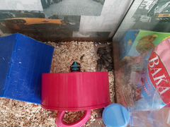 Джунгарики с аквариумом