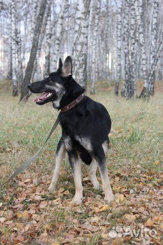 Собака Максик в добрые руки купить на Зозу.ру - фотография № 3