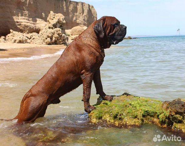 Ми Кюн Доса(Великая собака красоты) (Корейский мас купить на Зозу.ру - фотография № 2