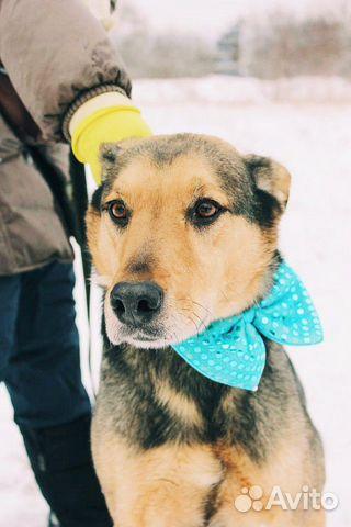 Взрослый пёс из приюта в дар купить на Зозу.ру - фотография № 2