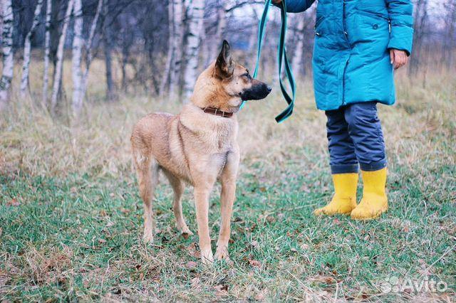 Молодая собака в дар купить на Зозу.ру - фотография № 5