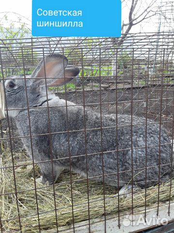Кролики 89202417955 купить 5