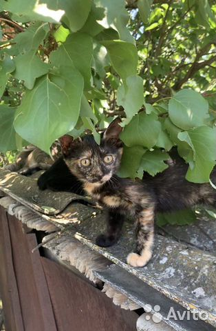 A kitten in good hands