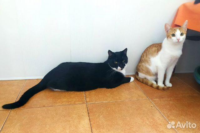 Котик и кошечка ждут своих хозяев  89038039728 купить 3