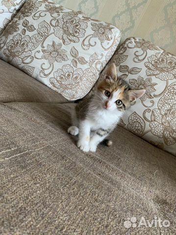 Кошка  89842775312 купить 1
