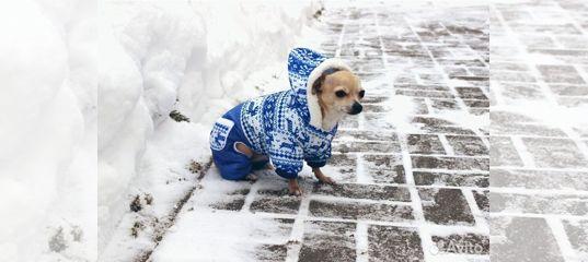 4d3508d0f239 Одежда для собак - купить, продать или отдать в Республике Татарстан на  Avito — Объявления на сайте Авито
