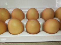 Инкубационное яйцо билефельдер