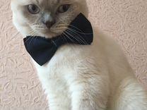 Кот приглашает на вязку