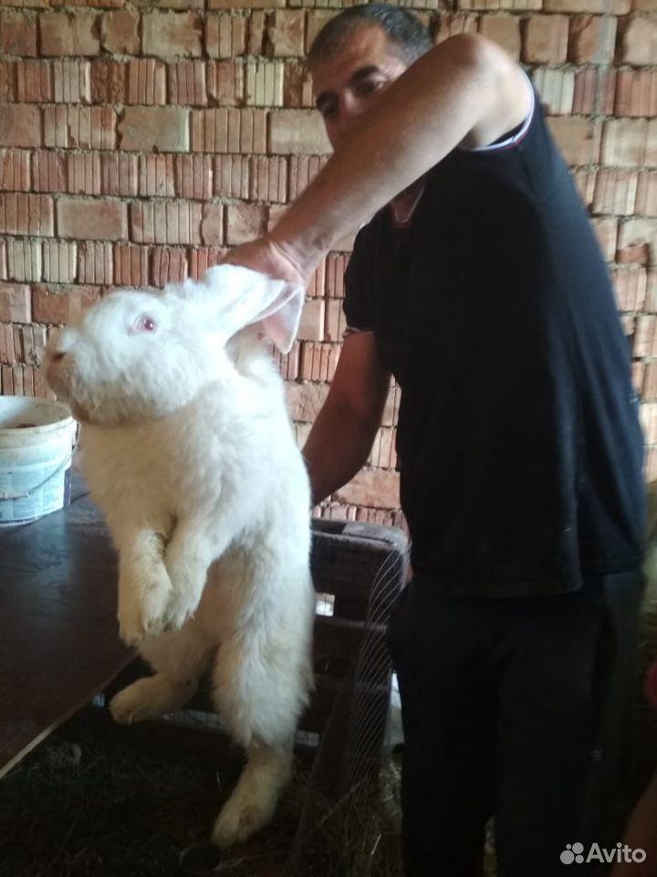 Кролики  89896573585 купить 1