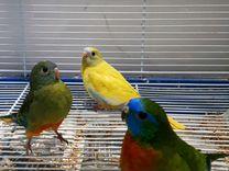 Лазурные попугаи