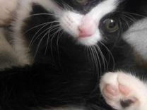 Отдам котёнка в хорошие руки, девочка, к лотку при