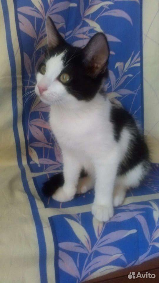 Котята в добрые ручки  89064108930 купить 3