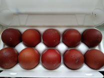 Яйцо инкуб. Маран чёрно-медный, Кучинская, Джерсий — Птицы в Москве