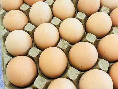 Яйцо куриное. Яйцо домашнее. Кремовое яйцо